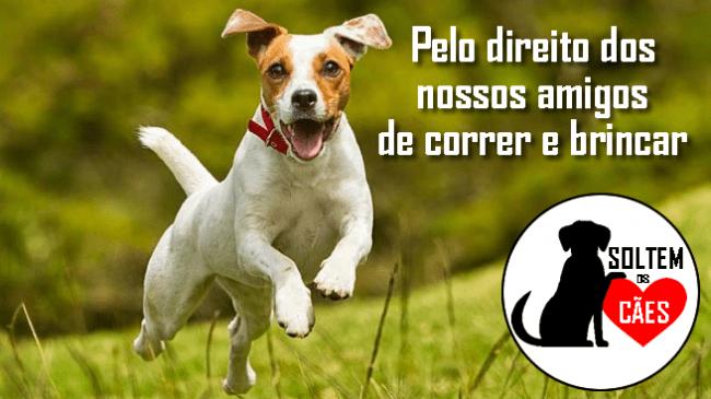 Petição - PELO DIREITO AOS CÃES DE ANDAREM SEM TRELA